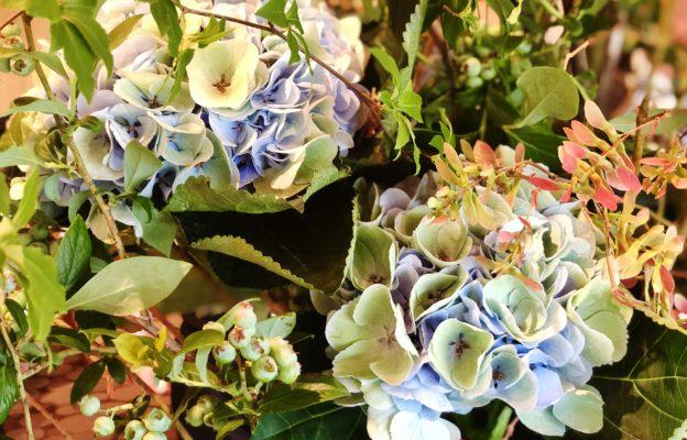 季節の花、その意義。